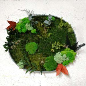 combinatie din muschi, licheni si plante