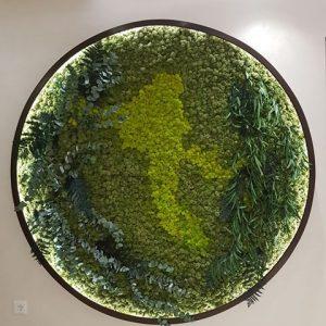 Cerc cu licheni si plante